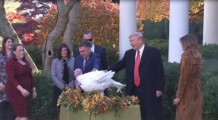 Trump Thanksgiving turkey